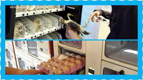 Необычные торговые автоматы из Японии