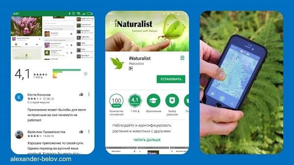 Стартап iNaturalist: приложение для распознания животных и